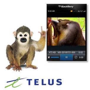 Marketing monkeys