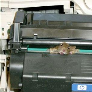 A Better Mouse Trap
