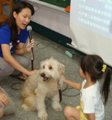 Smartphones are dogs' best friend in Taiwan