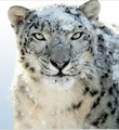 Apple sued by Mac clone maker over Snow Leopard
